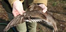 lefoglalt védett madár