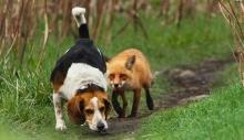 róka és kutya
