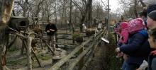 látványetetés a kecskeméti vadaskertben