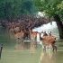szarvasok az eső után Gemenceen