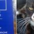 macska és útlevele