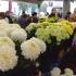 virágvásár mindenszentek