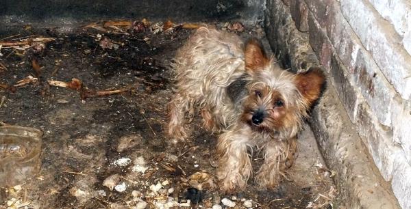 sínylődő kutya egy nagykőrösi tanyán
